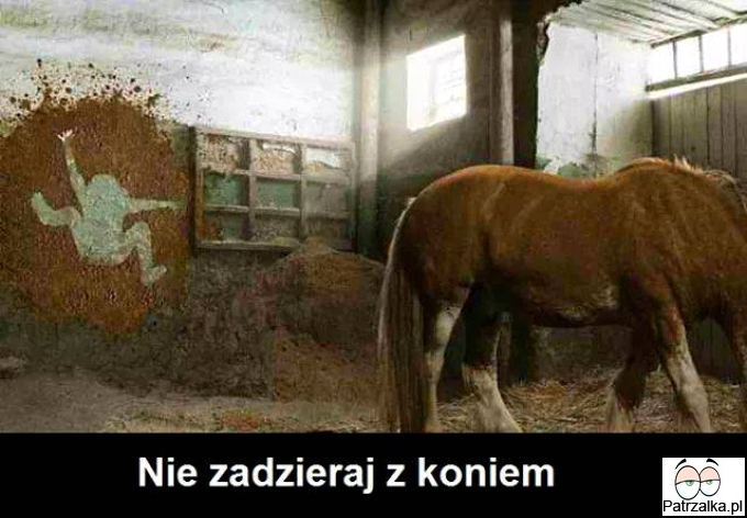 Nigdy ale to nigdy nie zadzieraj z koniem