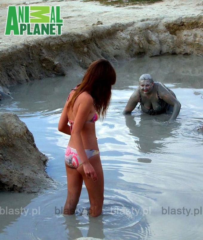 Oto widzmy jak hipopotam broni swojego terytorium. - Czytała Krystyna Czubówna.