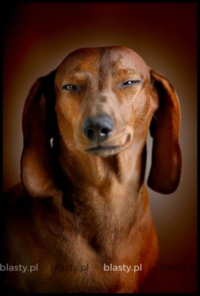 Pies jest przeciwieństwem kobiety wszystko rozumie ale milczy