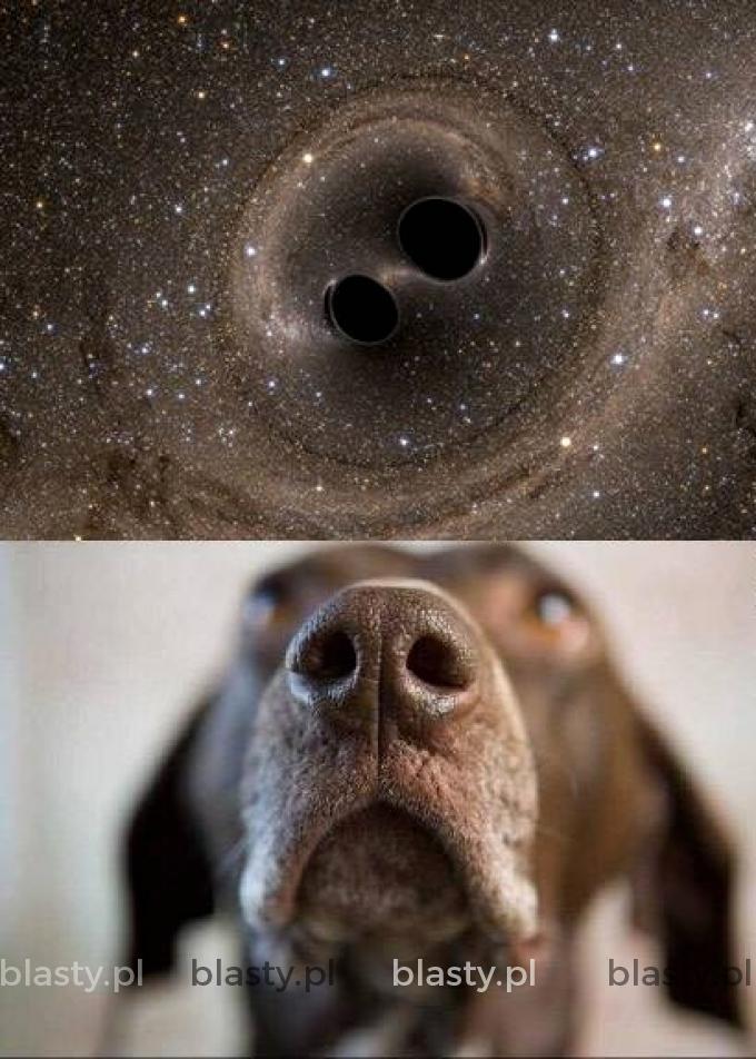 Pies jest wszechświatem