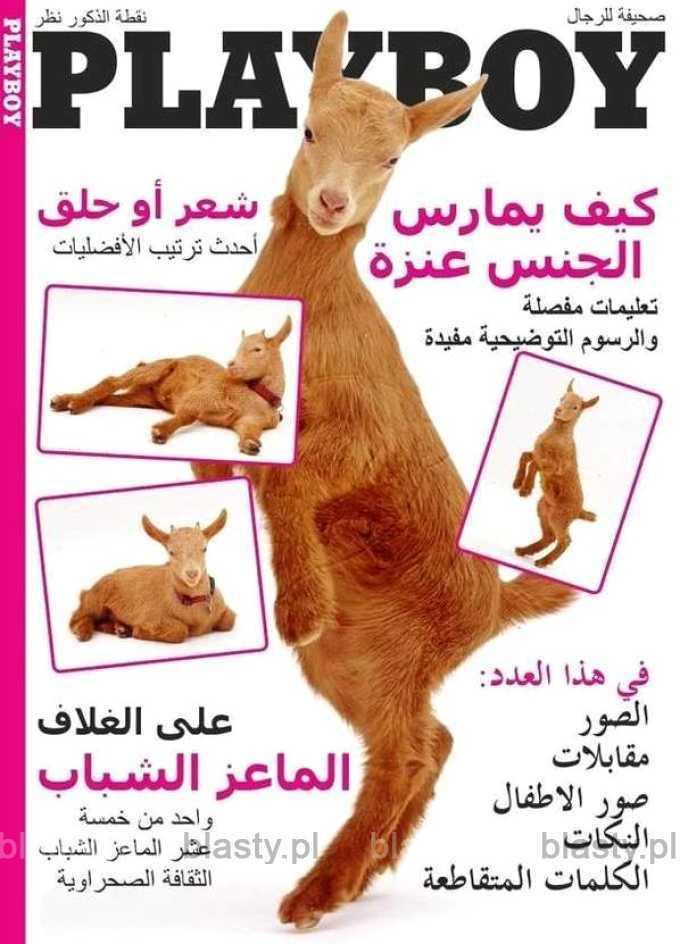 Playboy muslim edition