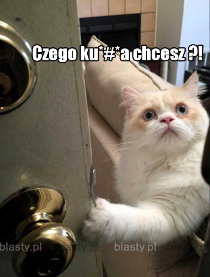 Z kotem nie pogadasz...