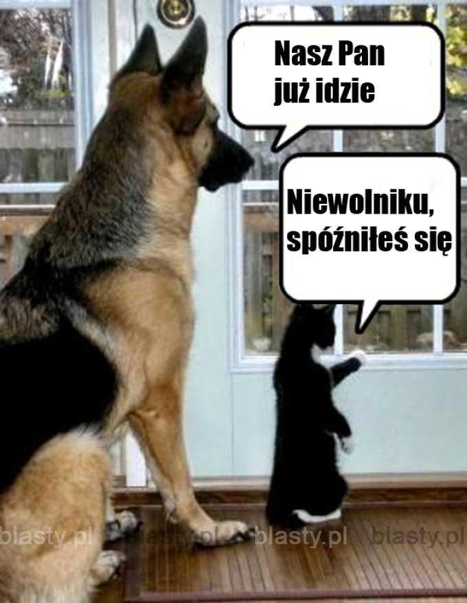 Zasadnicza różnica między kotem, a psem.