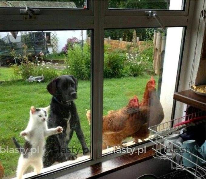 Znowu nas nie zaprosili na obiad
