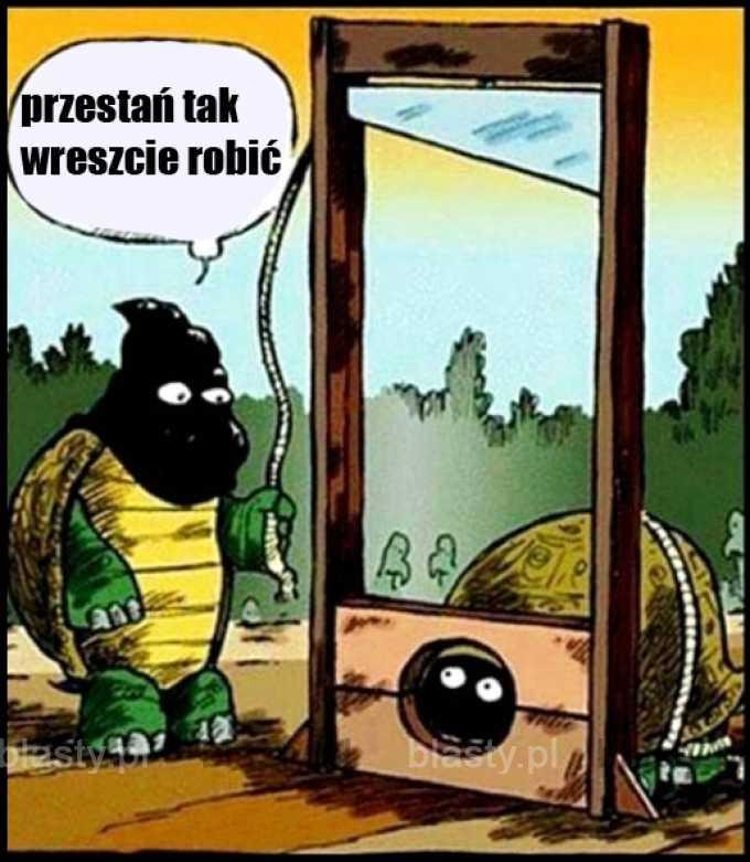 Żółwie takie są