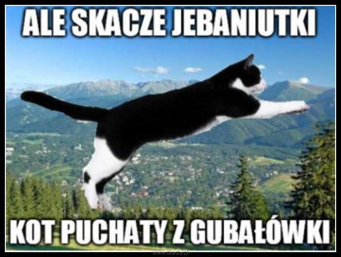 Ale skacze jebaniutki kot puchaty z gubałówki
