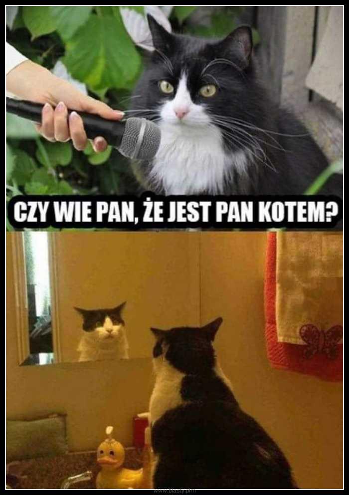 Czy wie Pan, że jest kotem