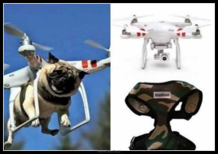 Dron dla psa