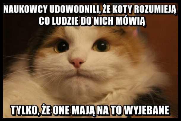 Znalezione obrazy dla zapytania mem z kotem