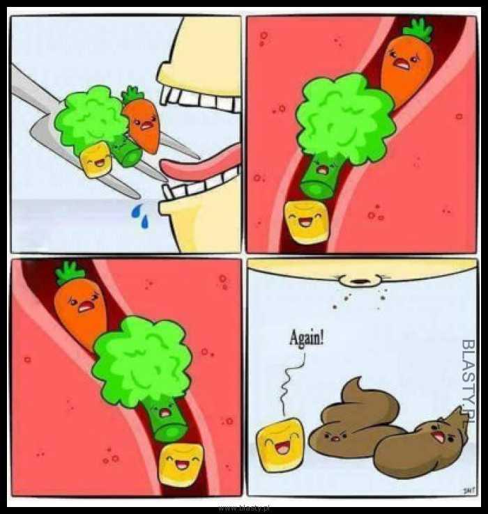 Kukurydza zawsze wygrywa