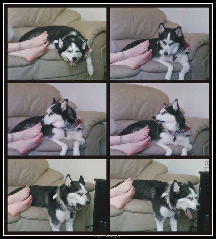 Pies i stopy