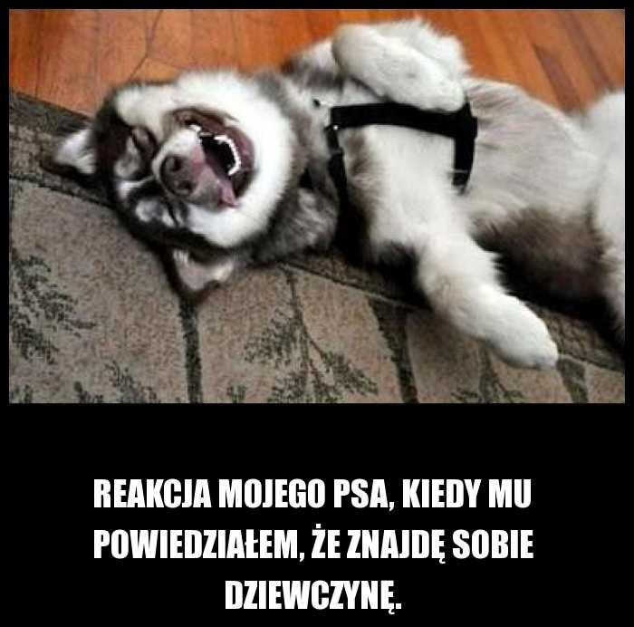 Reakcja mojego psa