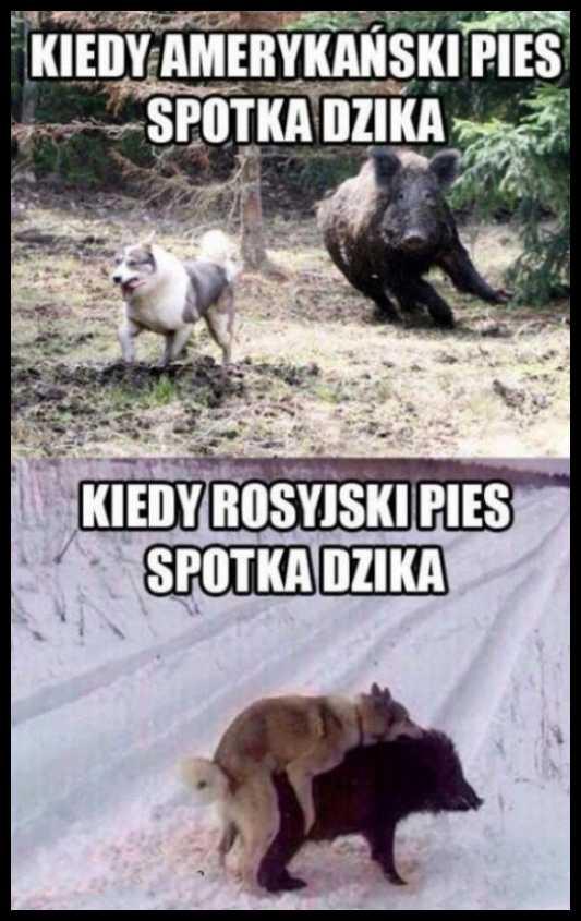 Rosyjski pies