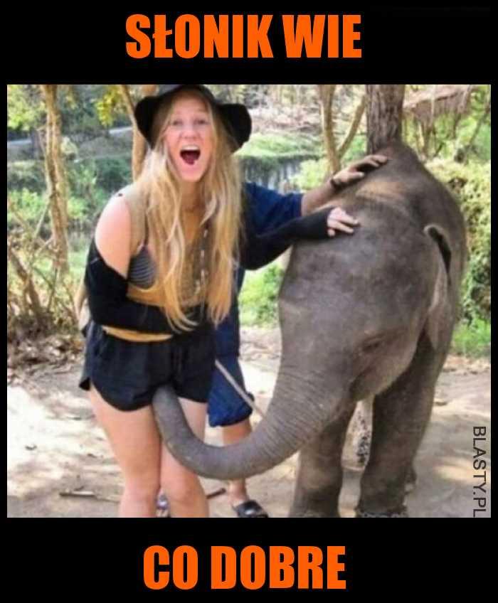 Słonik wie