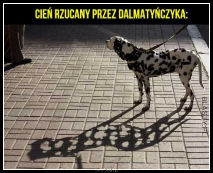 Cień rzucany przez dalmatyńczyka