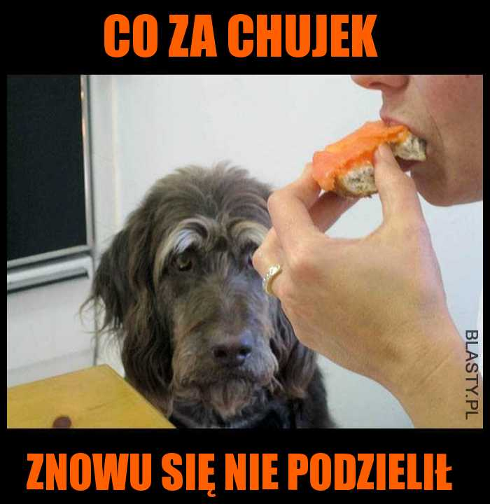 Co za chujek