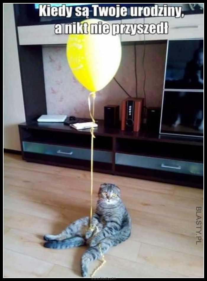 Kot Urodziny Memy