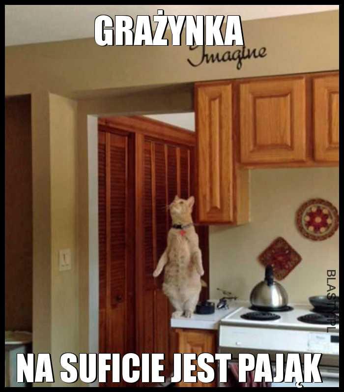 Koteł patrzy na sufit