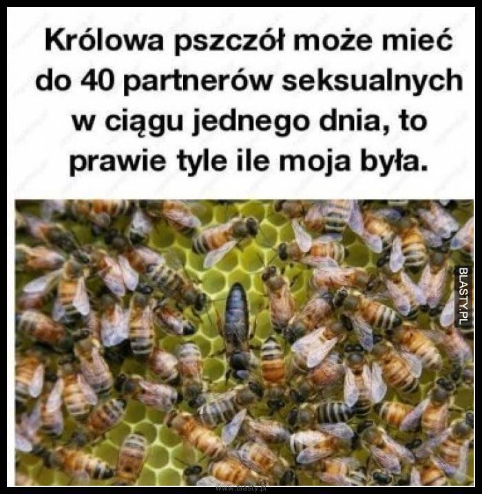 Królowa pszczół może mieć do 40 partnerów seksualnych w ciągu jednego dnia