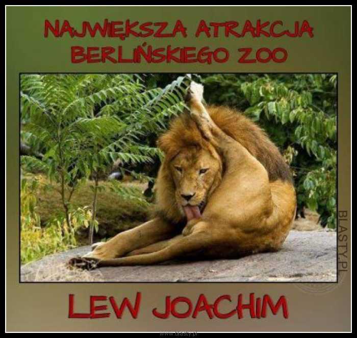 Największa atrakcja Berlińskiego Zoo Lew Joachim