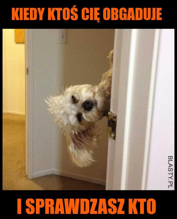 Pies zerka przez drzwi