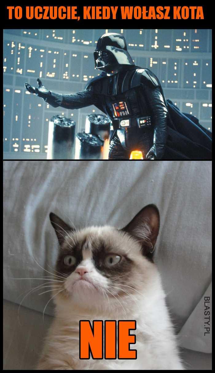 To uczucie, kiedy wołasz kota