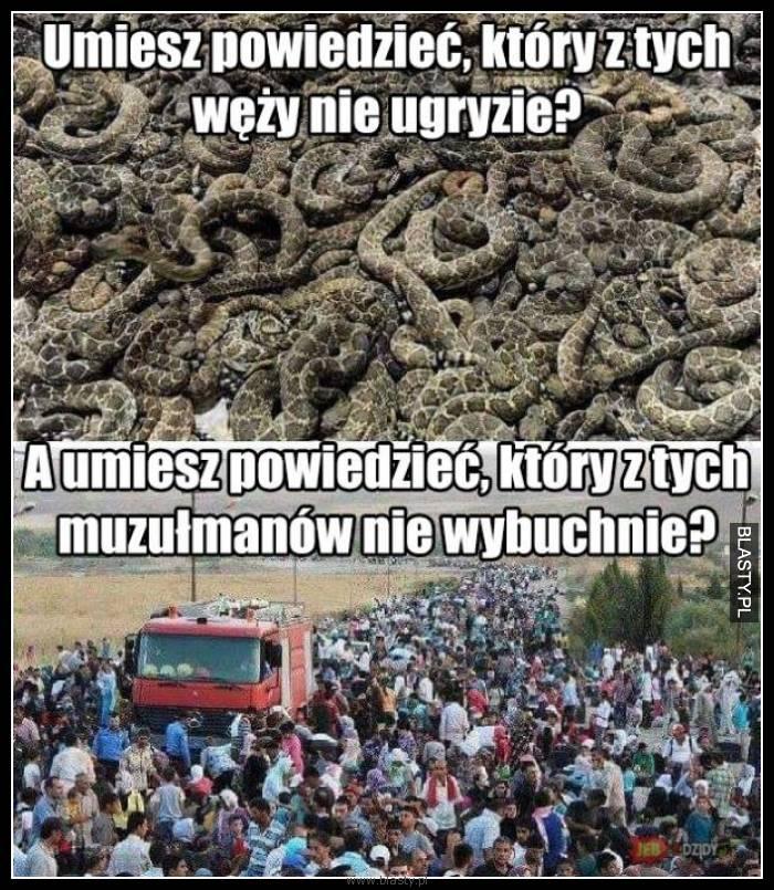 Umiesz powiedzieć, który z tych węży nie ugryzie ?