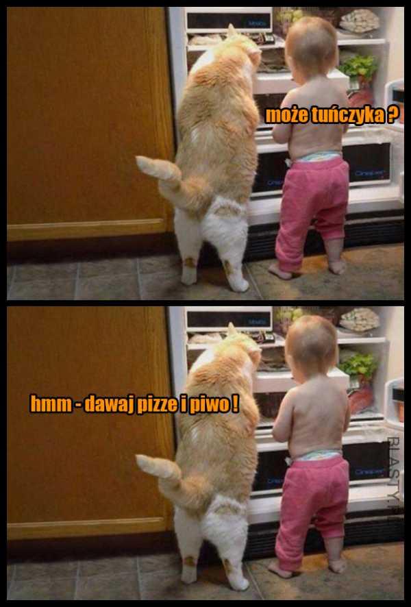 Wybredny kot wyzyskiwacz