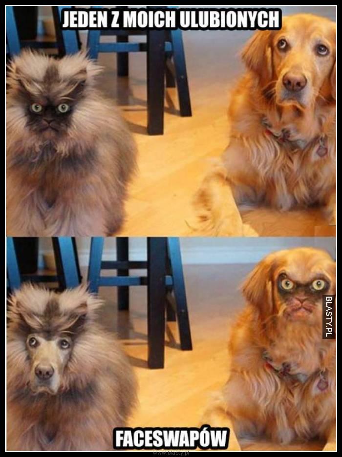 Faceswap kot i pies