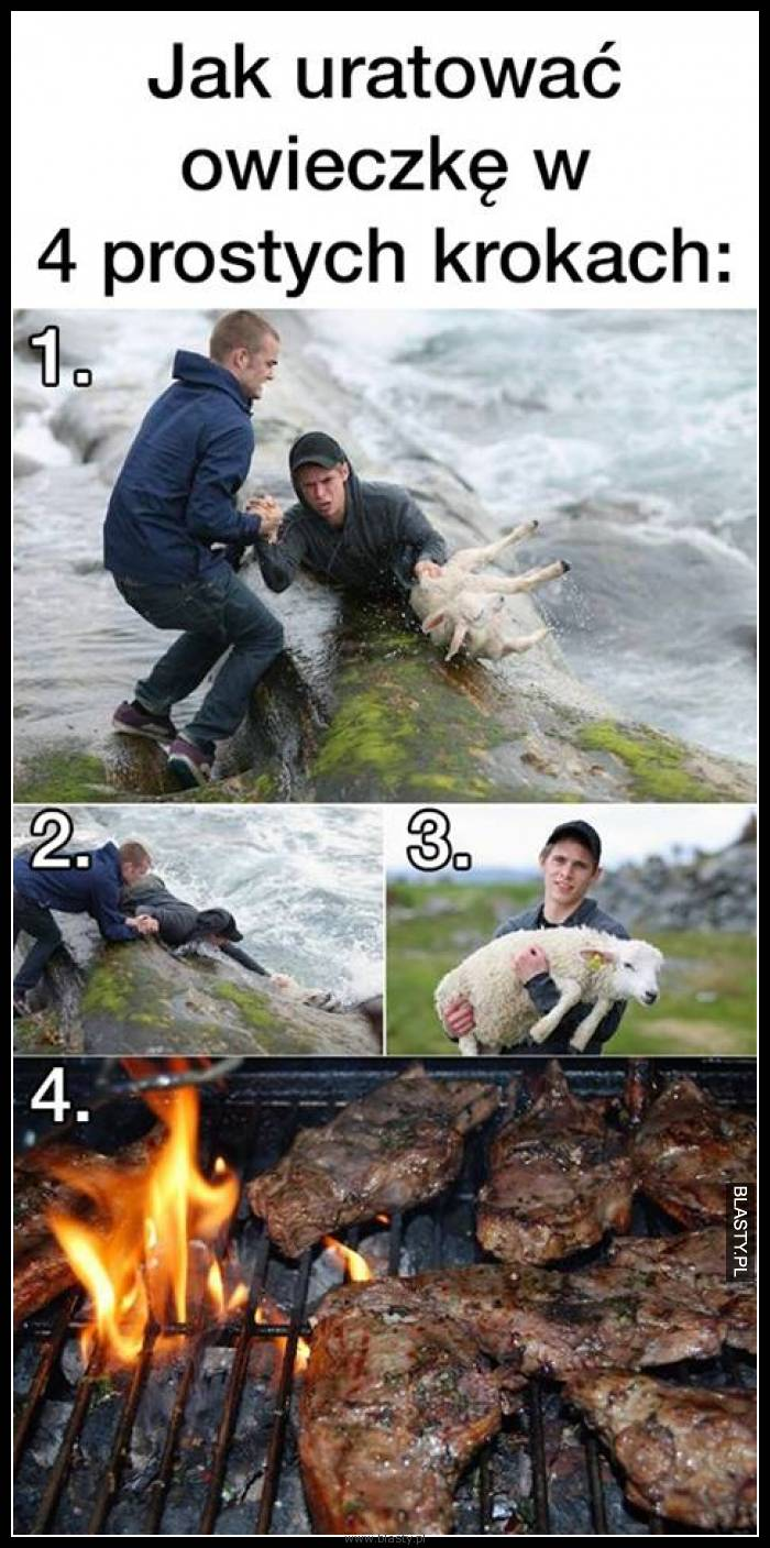 Jak uratować owieczke w 4 prostych sposobach