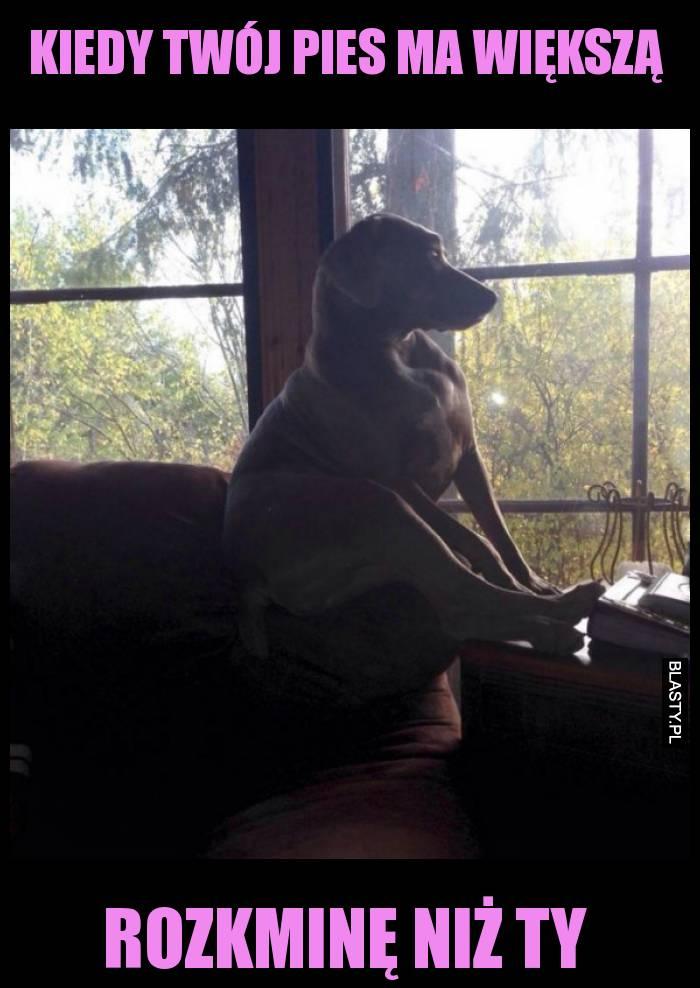 Kiedy twój pies ma większą rozkminę niż ty