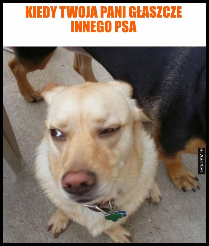 Kiedy twoja pani głaszcze innego psa