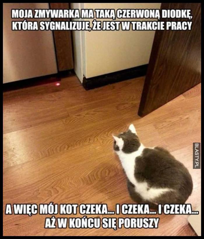 20 Memów Kot Czeka Najlepsze śmieszne Memy I Demotywatory