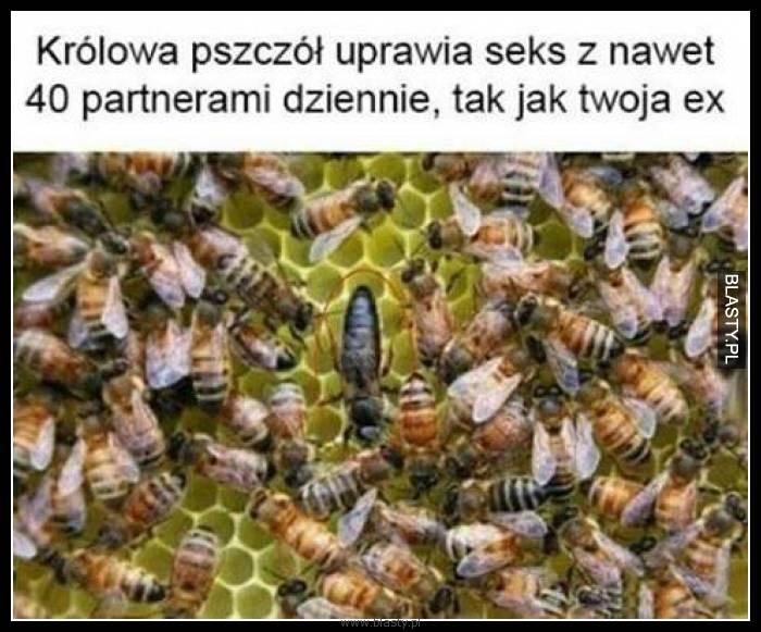 Królowa pszczół uprawia seks z nawet 40 partnerami dziennie, tak jak Twoja ex