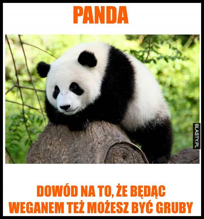 Panda dowód na to, że będąc weganem też możesz być gruby