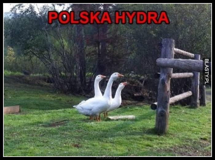 Polska hydra