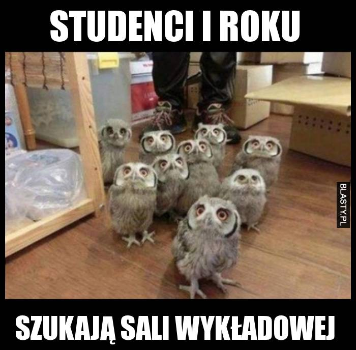 Studenci I roku szukają sali wykładowej