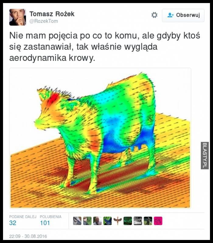 Aerodynamika krowy