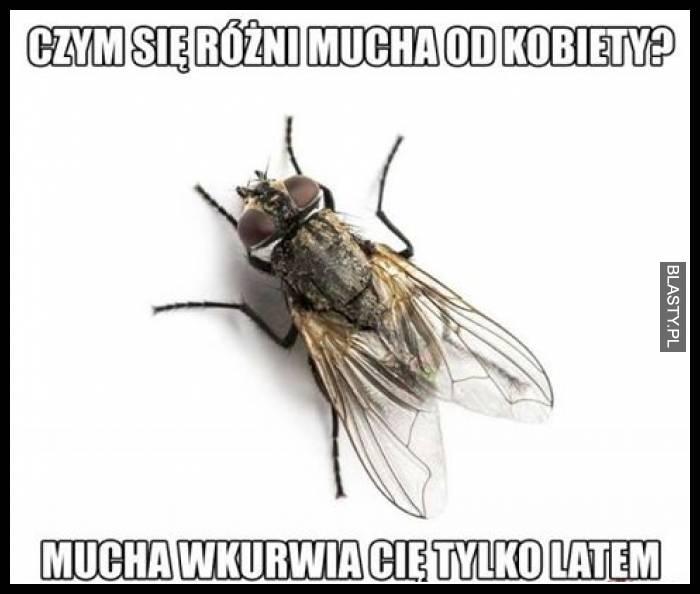 Czym się różni mucha od kobiety