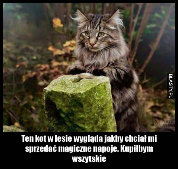 Kot w lesie