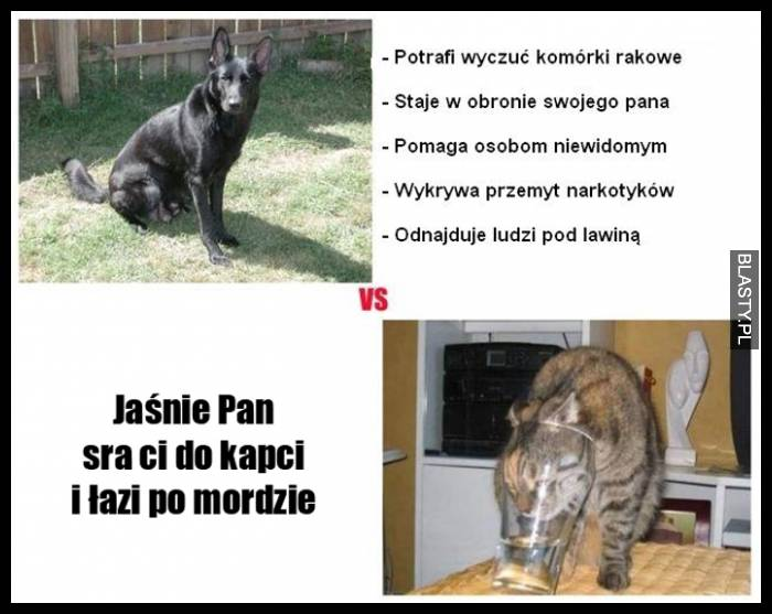 Pies Vs Kot Memy Gify I śmieszne Obrazki Facebook Tapety