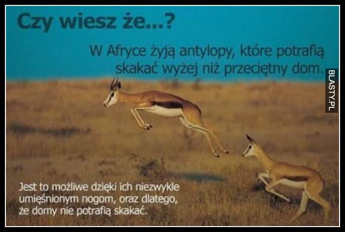 Czy wiesz, że w afryce żyją antylopy, które potrafią skakać wyżej niż przeciętny dom