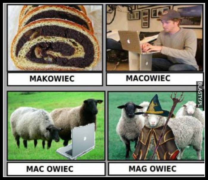 Makowiec, macowiec mac owiec, mag owiec