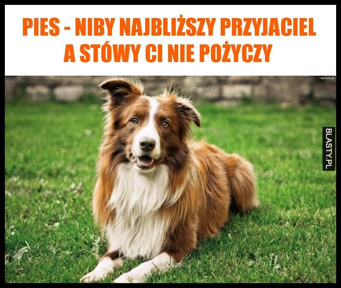Pies - niby najbliższy przyjaciel a stówy Ci nie pożyczy