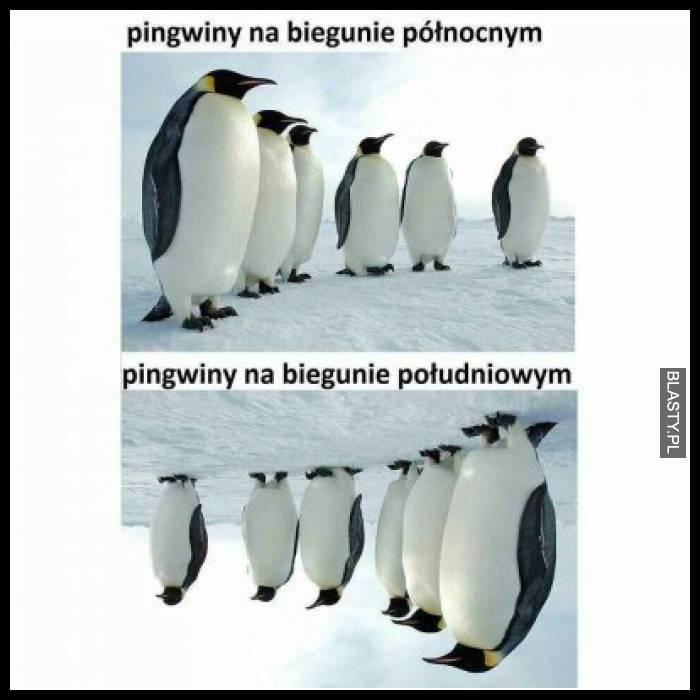 Pingwiny na biegunie północnym vs Pingwiny na biegunie południowym