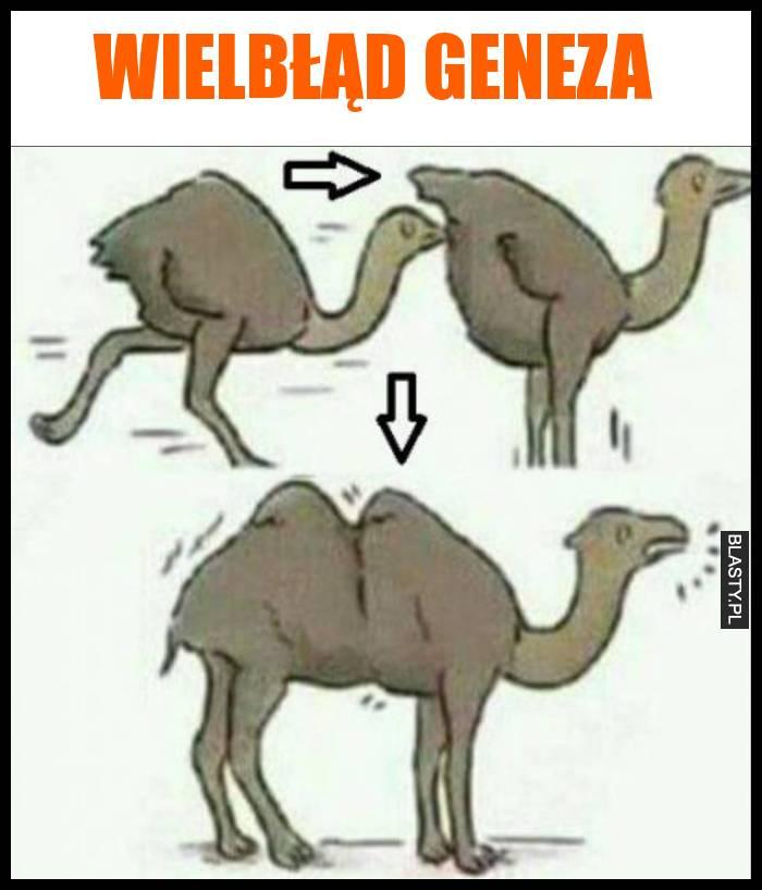 Wielbłąd geneza