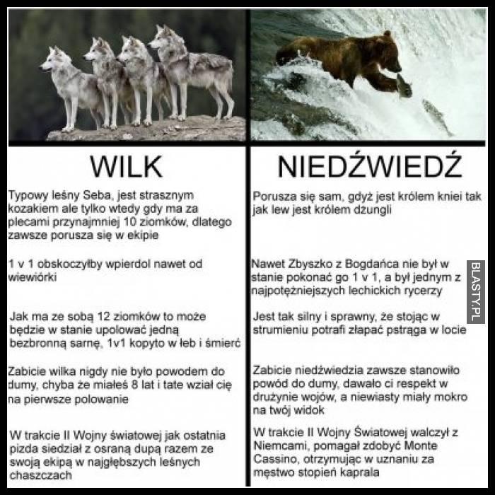 Wilk vs niedźwiedź