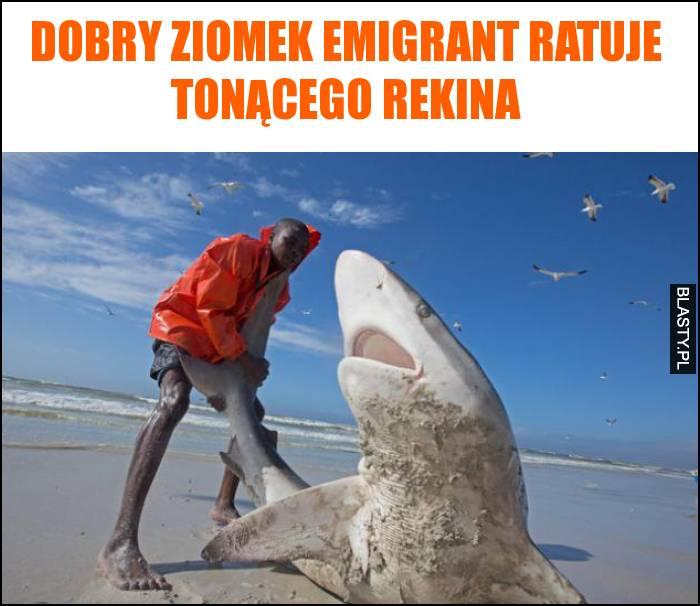 Dobry ziomek emigrant ratuje tonącego rekina