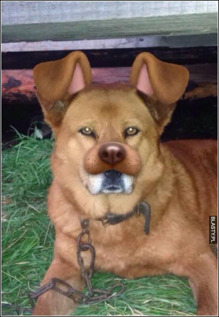 filtr instagrama na prawdziwym psie
