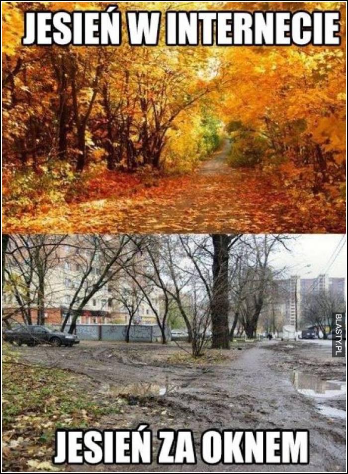 Jesień w internecie vs jesień za oknem